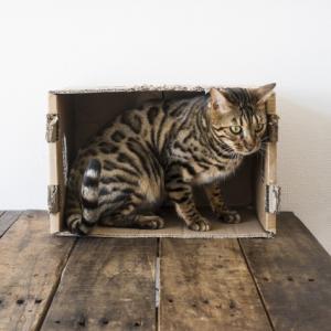 猫にいやがられない投薬のやり方