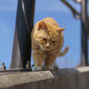 大人の猫のしつけ方は必要ない!?飼いやすい大人の猫
