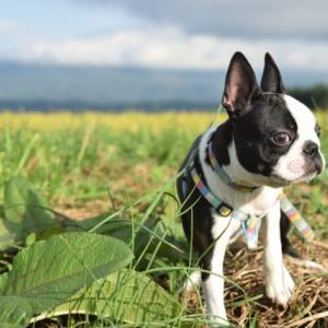 犬が下痢のときに便利な犬用おむつの選び方とおすすめ商品!