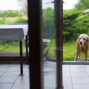 大型犬にはどんな種類があるの?人気の犬は?一挙にご紹介します!