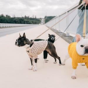 犬が服が嫌いで着てくれない?上手に着せる方法と服を着るメリット