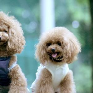 うちの子犬にも可愛い服作りたい!子犬の服の作り方をわかりやすく解説