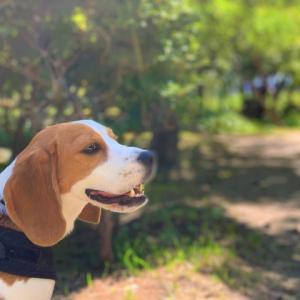 犬の年齢は1年で何歳に?犬種別の平均寿命と推定年齢の調べて方