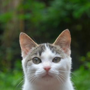知ってますか?猫のゲージを選ぶときのポイントと注意点(猫編)