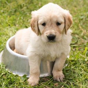ペットや赤ちゃんに安心!ウイルス・強力除菌・消臭ウィンカムケアとは?