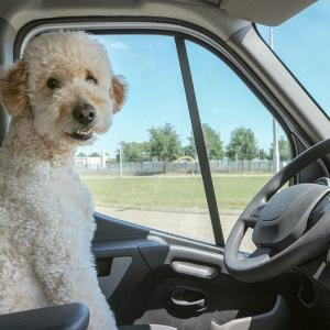 ある便利!愛犬との旅行に必要なペット用品はコレ!