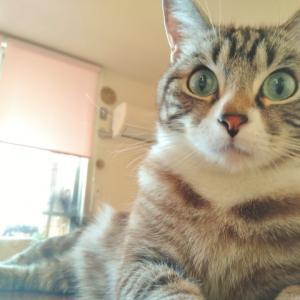 見逃さないで!猫の病気のサイン