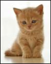 猫と「ベビースキーマ」、再び…