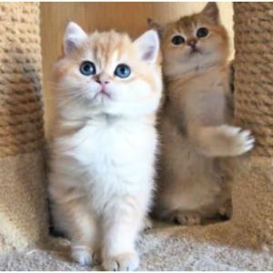 【業務連絡】 今週の予定 06/14 & W猫パンチ
