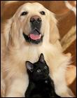 「猫の『苦手な動物』3選」ですか…
