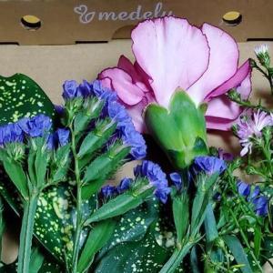 【花の定期便】medeluから新鮮なお花が届きました!