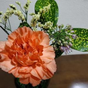 【花の定期便】medeluからカーネーションが届きました