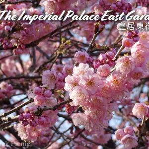 【Sakura】Like a botanical garden! /  The Imperial Palace East Garden @TOKYO STATION