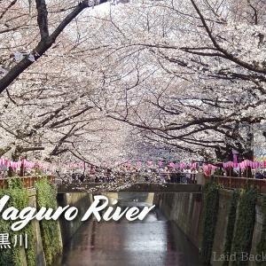 【Sakura 2019】A popular tourist spot / Meguro River @NAKAMEGURO