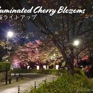 【Sakura 2019】Illuminated Cherry Blossoms / Chidori-ga-fuchi Ryokudo @CHIDORIGAFUCHI