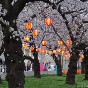 【Sakura 2019】Kinshi Park Sakura Festival near the station @KINSHICHO