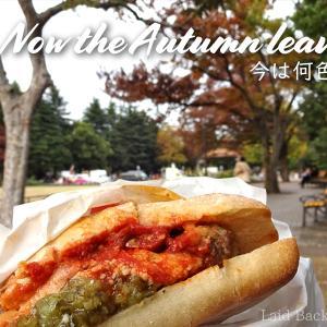[Autumn leaves] Hibiya Park @YURAKUCHO