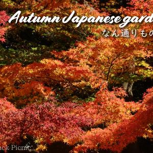 【Autumn leaves】Japanese garden next to Tokyo Dome / Koishikawa-Kōrakuen @KORAKUEN