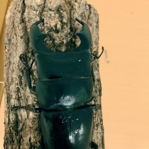 クワガタの幼虫の暴れについて。