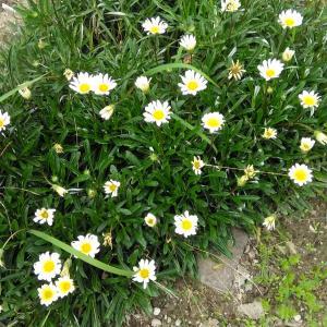 花たちは、増殖中!