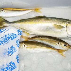 餌なしの仕掛けジグサビキは初心者でも簡単に釣れる