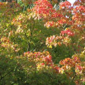 病院で感じた秋の深まり