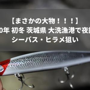 【まさかの大物!!!】2020年 初冬 茨城県 大洗漁港で夜釣り シーバス・ヒラメ狙い