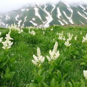 ▲山の記憶~立山、唐松岳、赤岳、常念岳、谷川岳