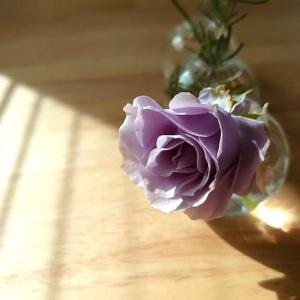 魅惑のバラ