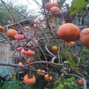 秋の終わりを実感させられ