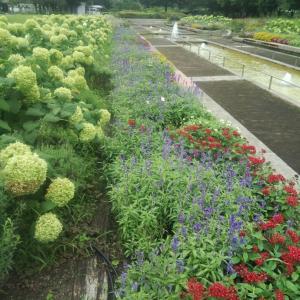 荒子川公園の花々 知人が送ってくれた写真です