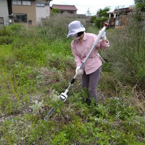 ブルーベリーの挿し木と庭の枝きりから草刈りへ