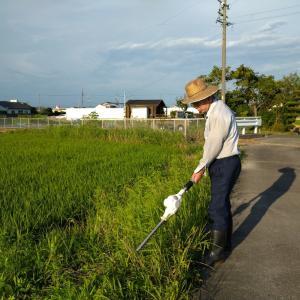 本日も水田の草刈りへ