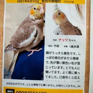 迷子の小鳥を探す貼り紙を見て  愛知健愛西市