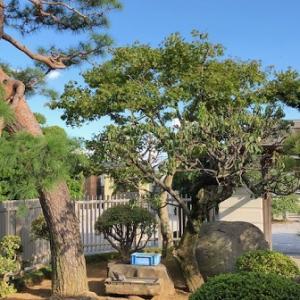 坐禅会開催日変更とブログ一新のお知らせ