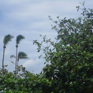 11月7日(木)乱れ打ちのゴルフはチカレタビ・・・