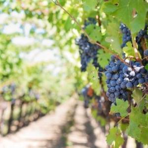 スペインワインのブドウの品種辞典~あの美味しさはどこから来るの?