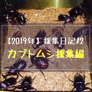 【2019年】採集日記#2(カブトムシ採集編)