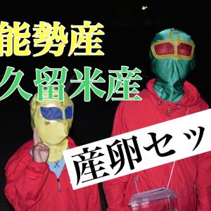 【能勢産・久留米産】オオクワガタの産卵セット