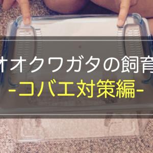 オオクワガタの飼育/コバエ対策編