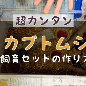 【超カンタン】カブトムシ飼育セットの作り方