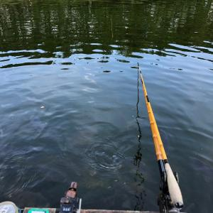 三和新池令和元年 8月13日釣行