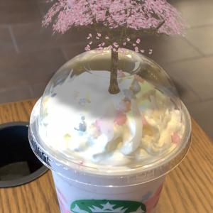 ARでとびだすスタバの桜!