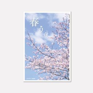 春うらら|山陽小野田市に開花した桜をPostcardにしてみました。