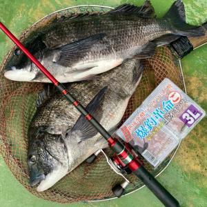 福丸観光漁業の釣果