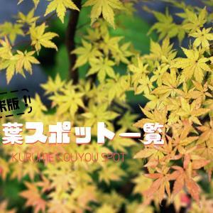 久留米で秋を楽しもう!久留米市近隣の紅葉スポットをまとめて紹介!
