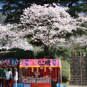 春を楽しもう!久留米市で桜を満喫できるお花見スポットまとめ