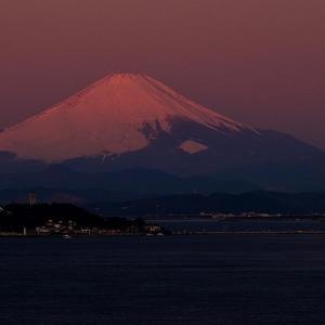 鎌倉湾(材木座海岸)と逗子湾との間の大崎公園岬からの江の島と富士