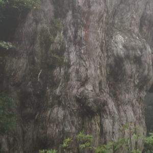 【世界自然遺産】太古の自然で縄文杉を見る