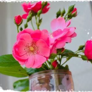 薔薇の写真、お花を撮ろうよ